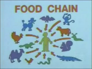 Food Chain_bb